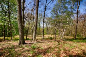 160 Chapin Rd Bernardsville Land for sale Feel @Home Realty (4)