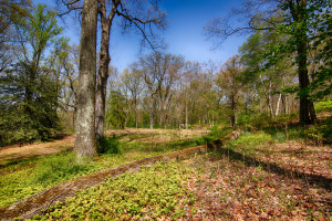 160 Chapin Rd Bernardsville Land for sale Feel @Home Realty (6)