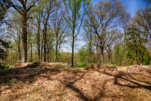 160 Chapin Rd Bernardsville Land for sale Feel @Home Realty (8)